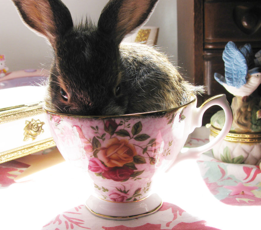 Bunny In A Cup