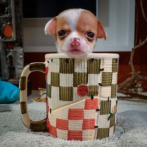 Puppy In A Cup