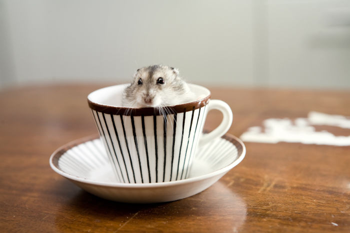 ===Dentro de una taza=== Cuteness-Explosion-Animals-In-Cups27__700