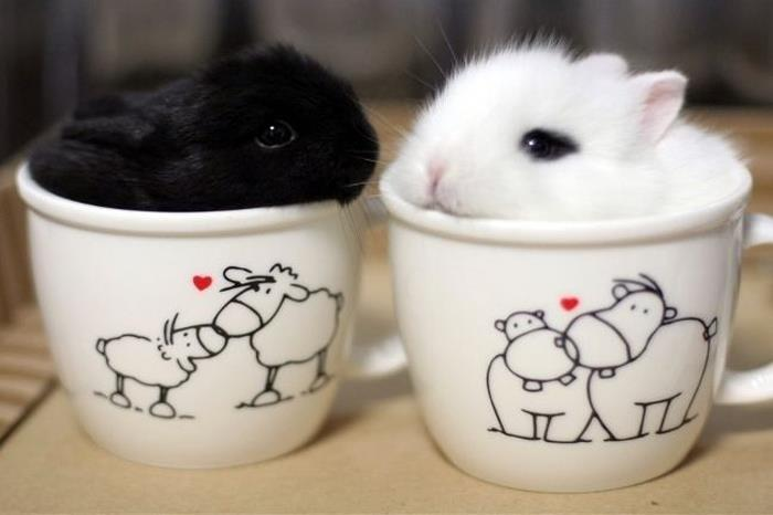 Bunnies In The Cups