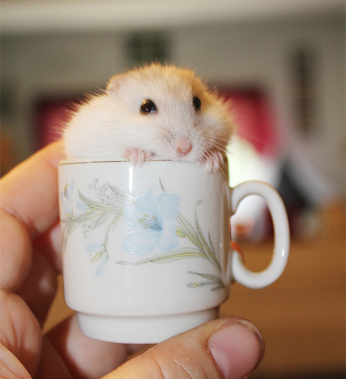 ===Dentro de una taza=== Cuteness-Explosion-Animals-In-Cups9__700