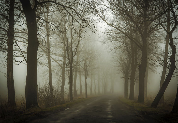 Misty Road – Poland