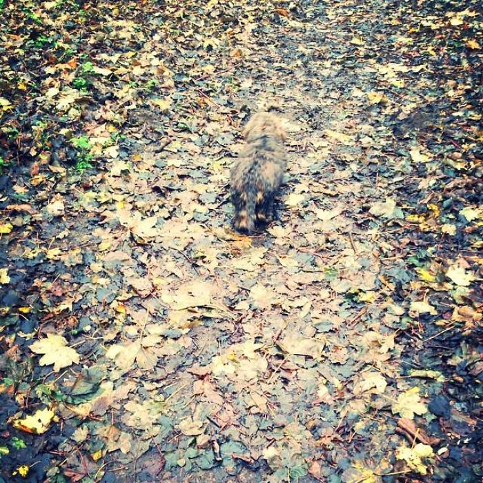 Find The Dachshund In The Autumn Leaves.
