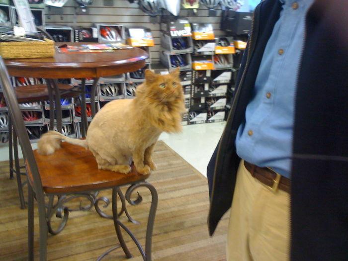 Baby Lion?