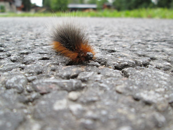 We Met This Hairy Caterpillar On Our Holiday :)