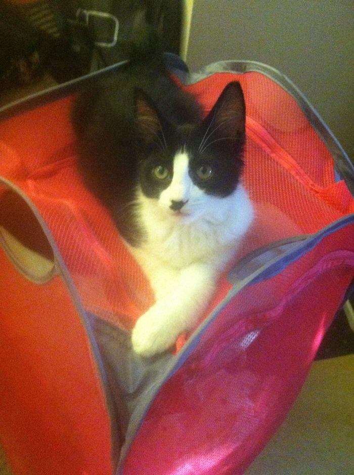 Kitler, The Kitten With A Hitler Stache!