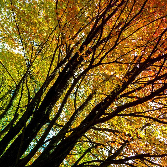 Fall Rainbow