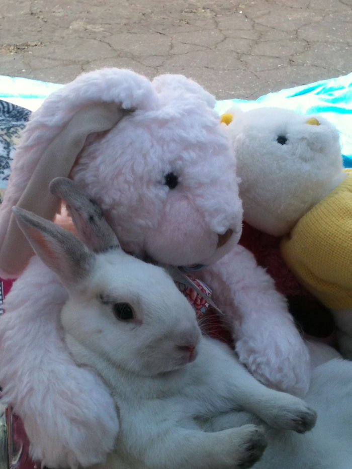 Just Toys. And Stripe The Rabbit