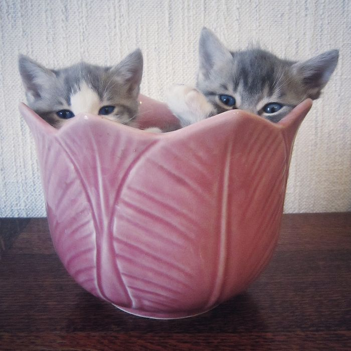 Cats In A Vase.