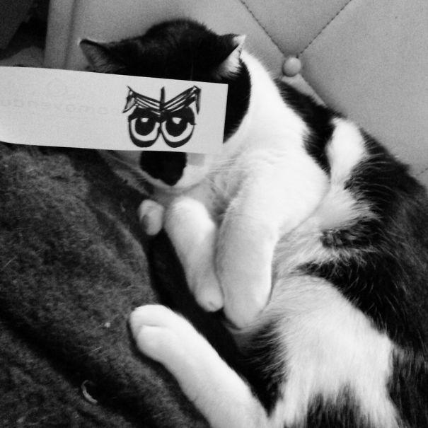 Cranky Kitty