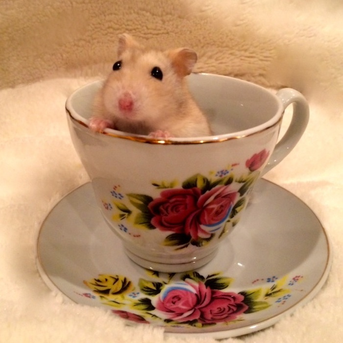 Lola In A Cup