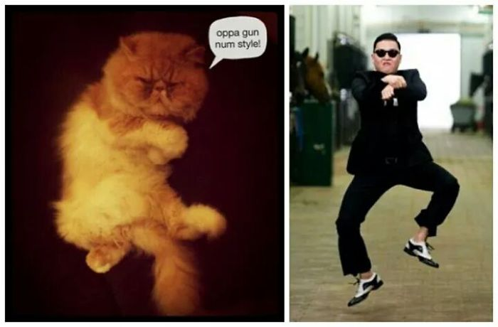 Psy Cat, Dancing Oppa Gun Num Style!