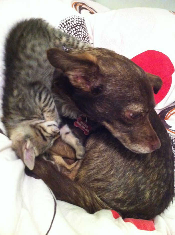 Again Doggy And Kitten.