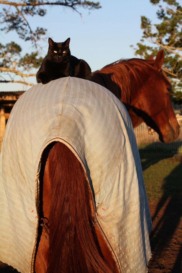 Morris The Horse Riding Cat