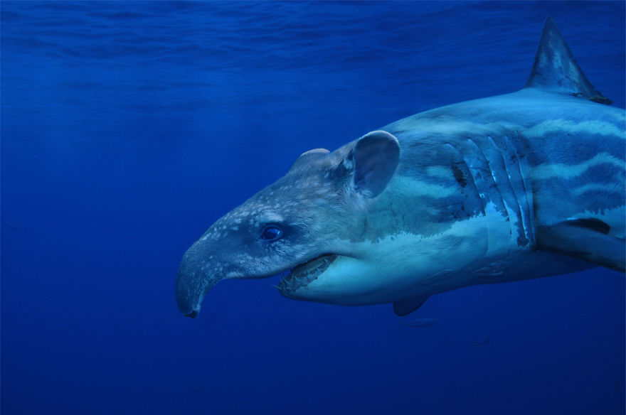 Tapir Shark