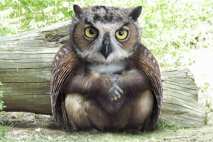 Owlarilla