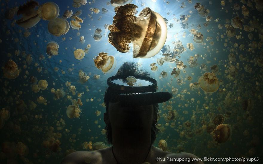 My Selfie With Jellyfish.