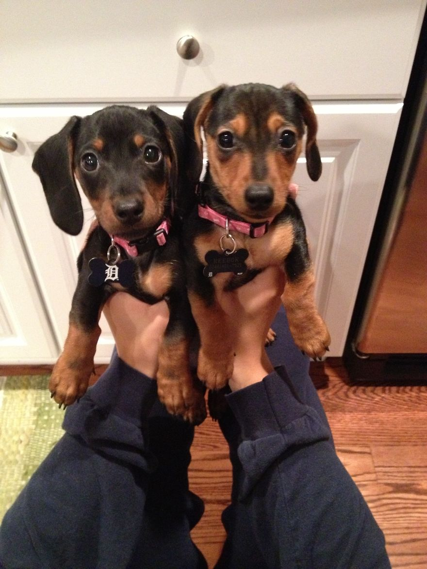 Two Wieners Are Better Than One