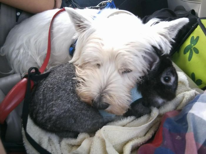 Fiby The Dog And Pelos The Rabbit