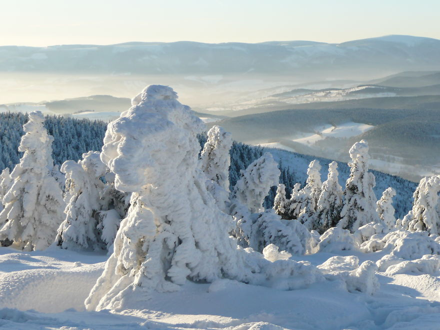 The Snow Giants, The Jeseniky Mts In The Czech Rep.