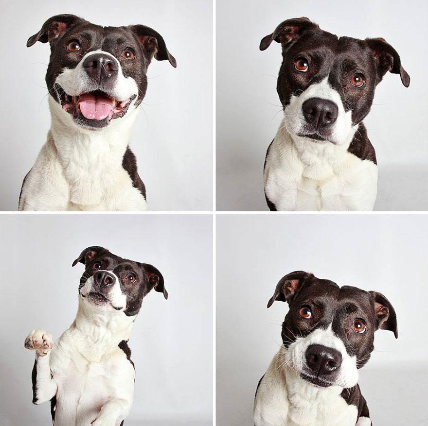 adopted-dog-teton-pitbull-humane-society-utah-14
