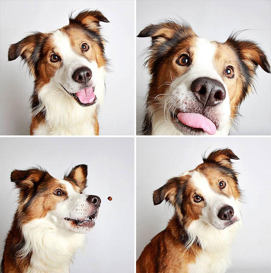 adopted-dog-teton-pitbull-humane-society-utah-17