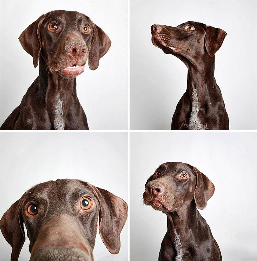 adopted-dog-teton-pitbull-humane-society-utah-18