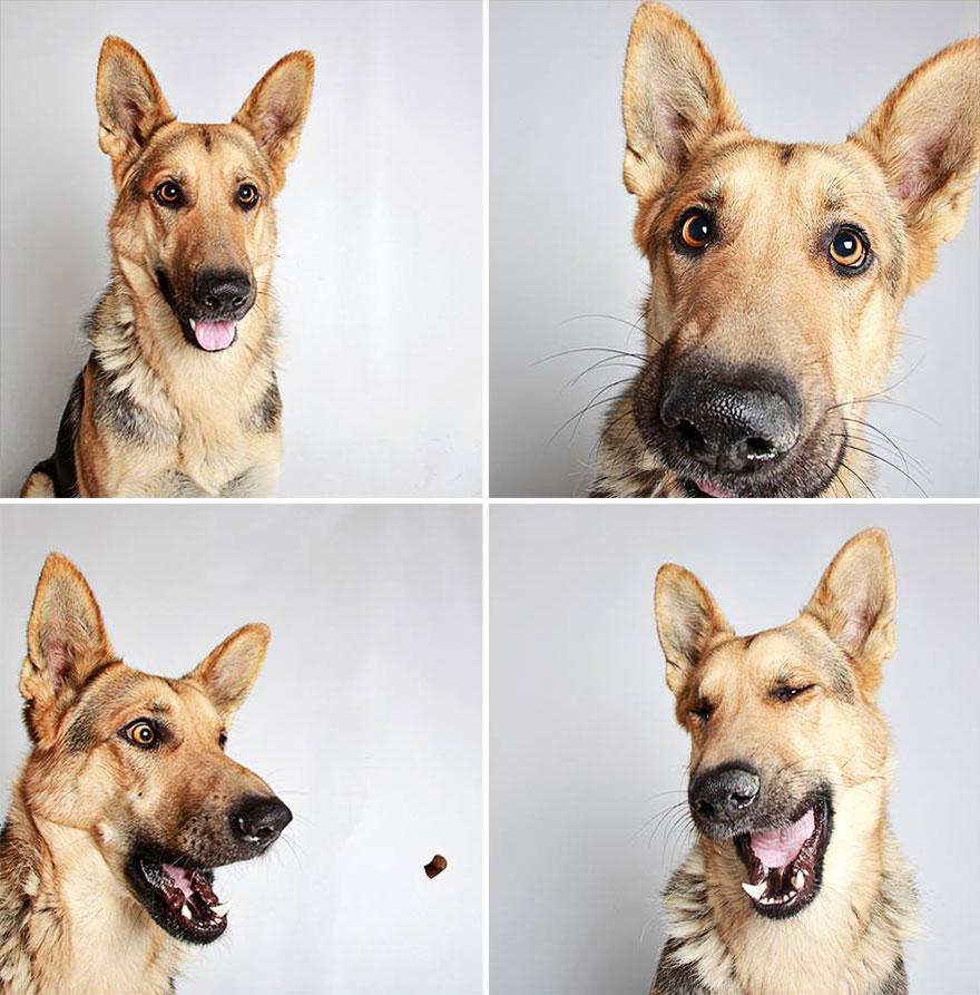 adopted-dog-teton-pitbull-humane-society-utah-3