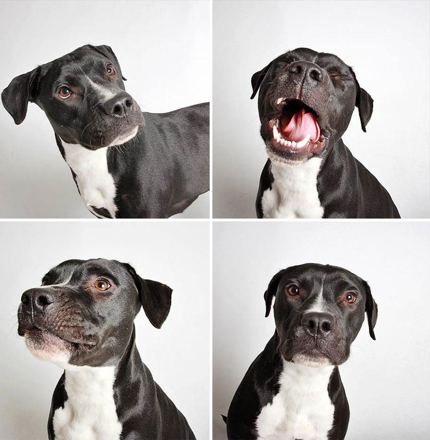 adopted-dog-teton-pitbull-humane-society-utah-9