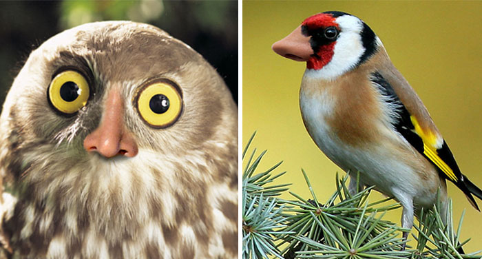 Birds With Noses