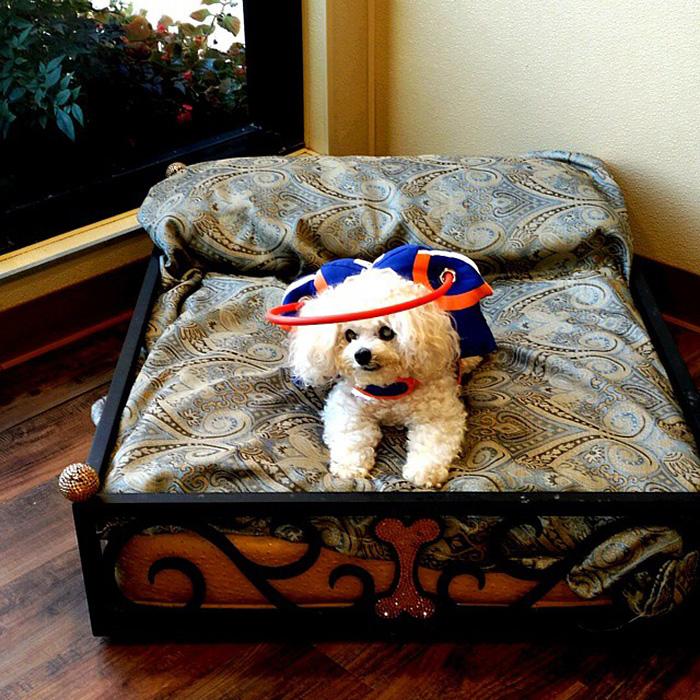 blind-dog-safety-device-muffins-halo-10