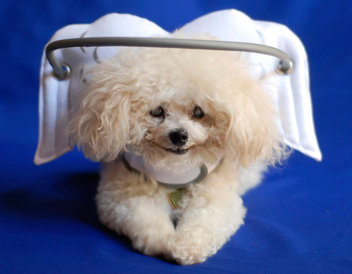This Angelic Halo Protects Blind Dogs From Bumping Into Things