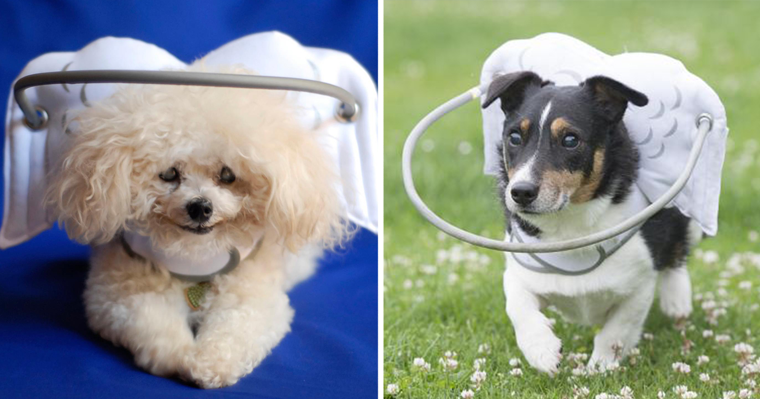 This Angelic Halo Protects Blind Dogs From Bumping Into
