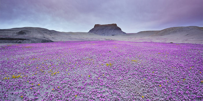 Post The Most Beautiful Flower Fields In The World