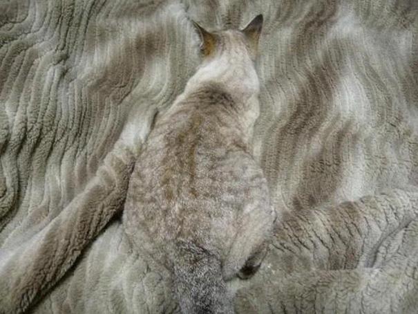 Pet Camouflage