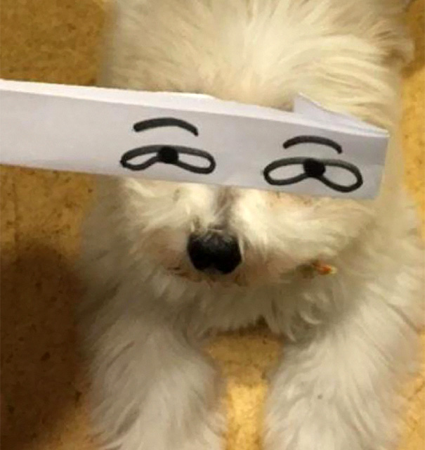 Cartoon Eyes On A Dog
