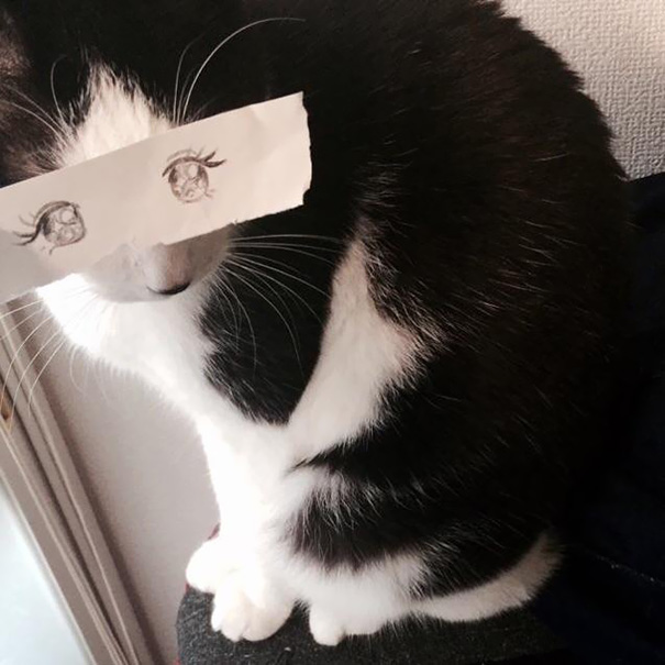 Cat Owners In Japan Are Giving Their Cats Funny Anime Eyes Bored Panda