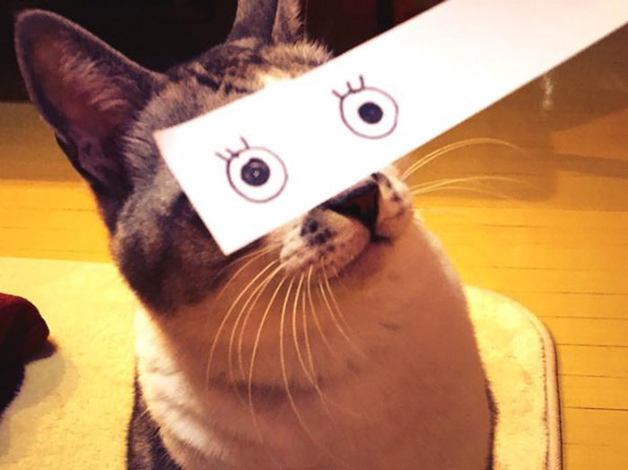 Cat Owners In Japan Are Giving Their Cats Funny Anime Eyes