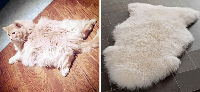Cat Looks Like This Rug