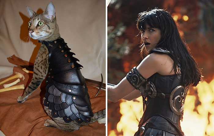 Cat Looks Like Xena, Warrior Princess