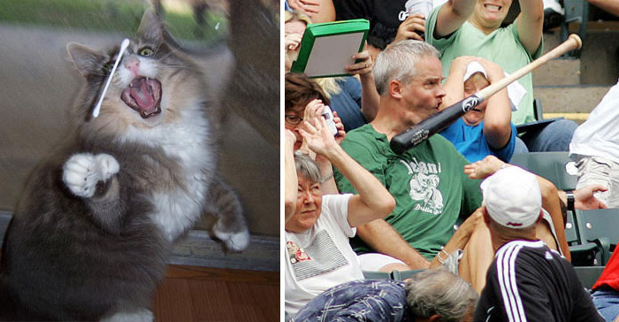 Cat Looks Like This Baseball Fan