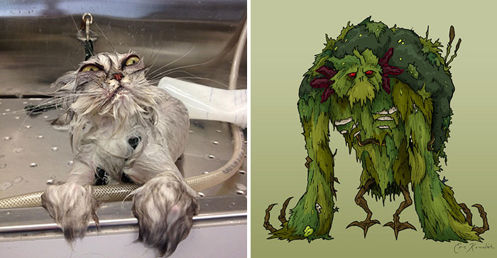 Cat Looks Like Swamp Monster