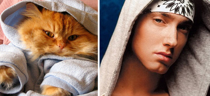 Dressed Up Cat Looks Like Eminem