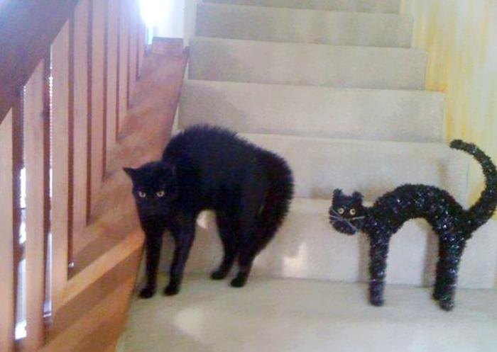 Cat Looks Like A Haloween Decoration