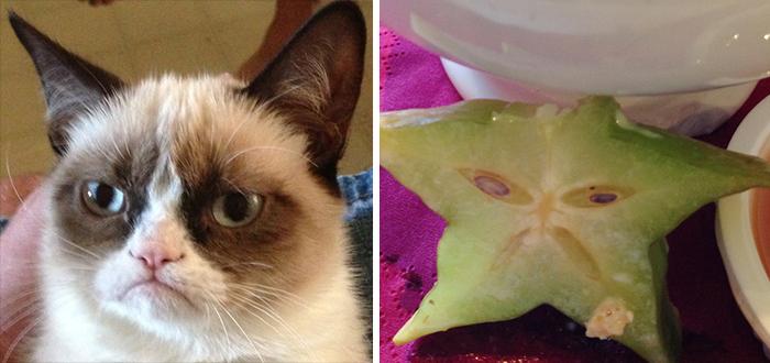 Grumpy Cat Looks Like A Starfruit