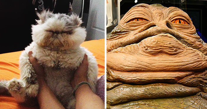 Cat Looks Like Jabba The Hutt