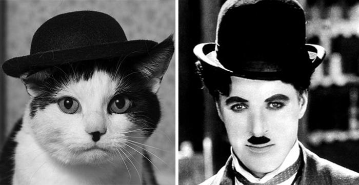 Чаплін Кішка