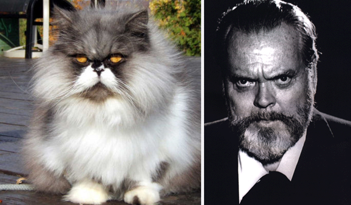 Cat Looks Like Orson Welles