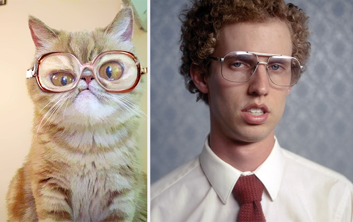 Cat With Glasses Looks Like Napoleon Dynamite