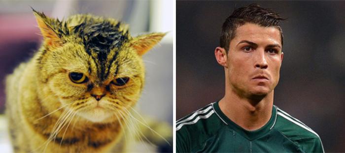 Cat Looks Like Ronaldo